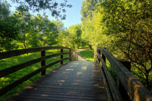 walk over a bridge into a forest
