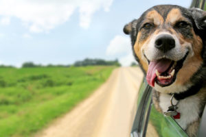 keeping pets happy and safe